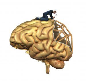 Brain Reconstruction